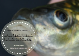 Essen Ikan Nilem Khusus Di Empang
