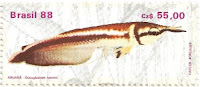 Selo peixe Aruanã