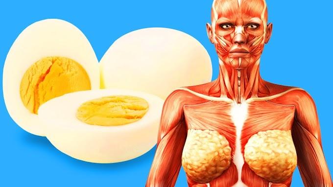Her Gün 2 Yumurta Yerseniz Vücudunuza Bu 8 Şey Olacak