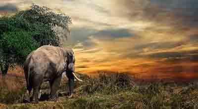 Faktor-faktor yang Menyebabkan Kepunahan Makhluk Hidup
