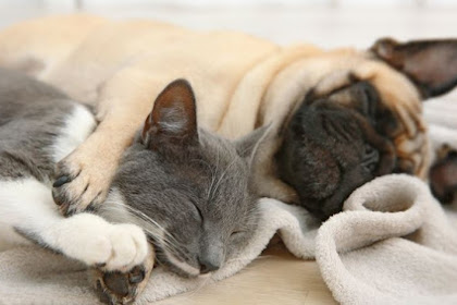 Pet health problems in Canada that benefit from Canadian pet health insurance