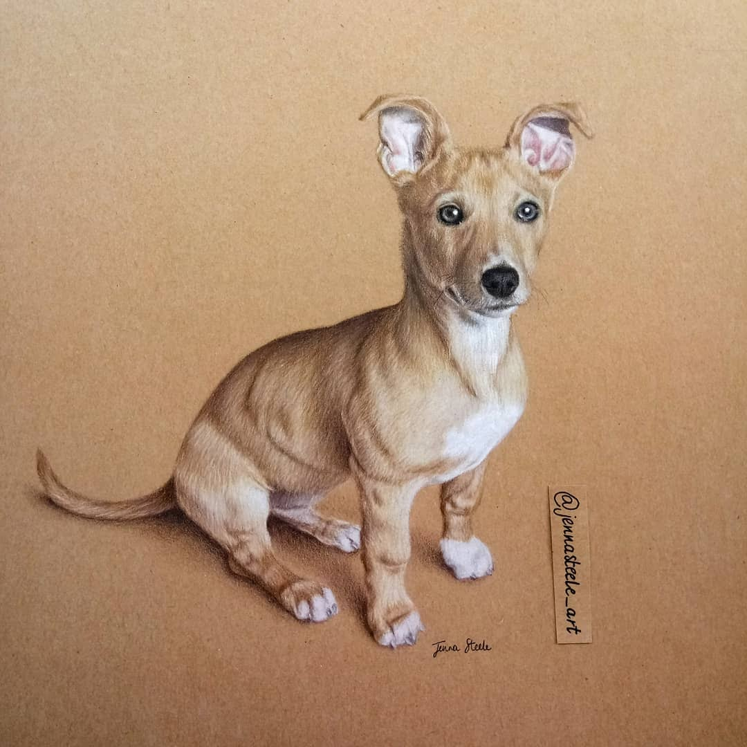 08-Pet-Portrait-Jenna-Steele-Collection-of-Pencil-Drawings-www-designstack-co