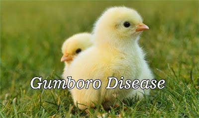 Gumboro Disease