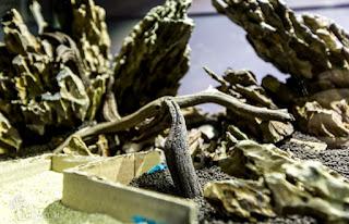 Dragon Stone Jenis Batu untuk Aquascape yang Bagus