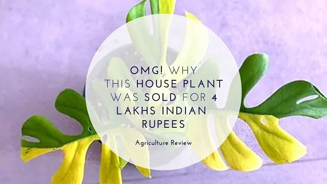 OMG! Why ThisHOUSE PLANT Was SOLD For 4 LAKHS INDIAN  RUPEES