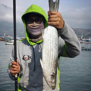 Umpan Alami Ikan Belanak