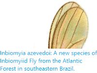 https://sciencythoughts.blogspot.com/2019/10/inbiomyia-azevedoi-new-species-of.html