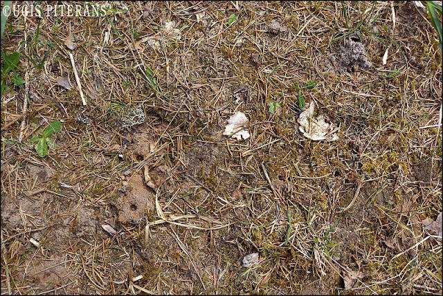 blogs3673a_Andrena_cineraria_habitat.jpg