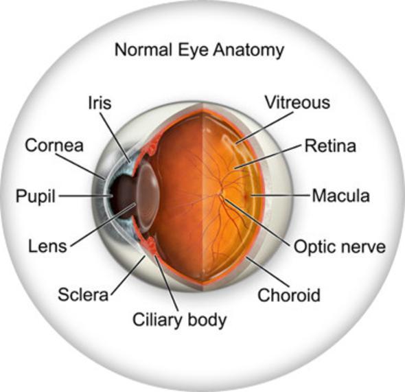retina mata