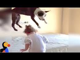 cães pulando na cama