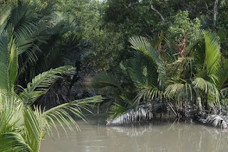 Canal in Sundarban