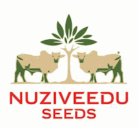 Nuziveedu Seeds Limited Company Distributorship logo