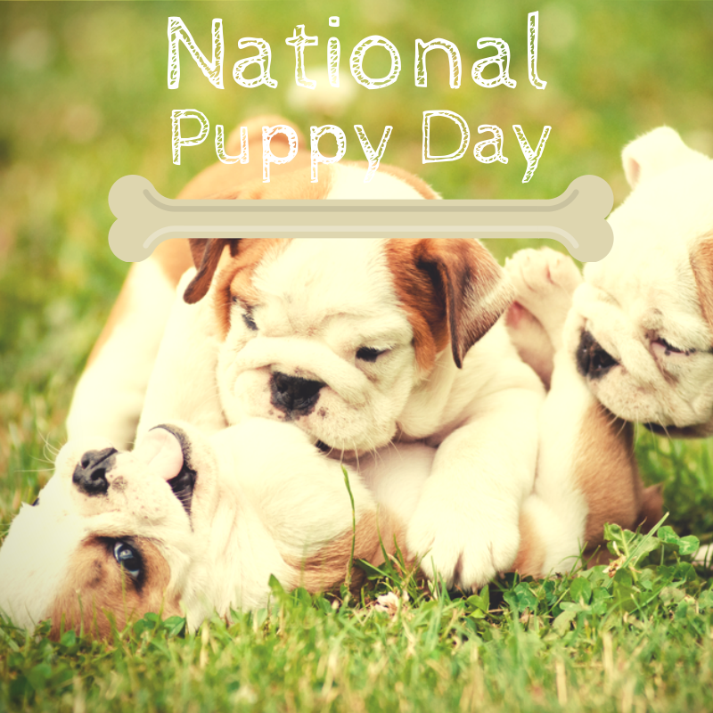 National Puppy Day in USA