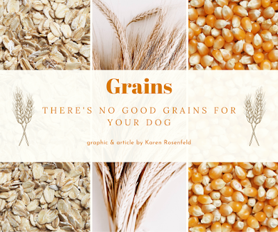 Species appropriate diet; get the grains out of your dog's diet