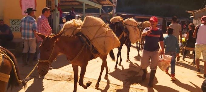 Comunidad de Palmor se declara en alerta por posible regreso a las armas del frente 19 Farc