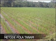 Perbedaan metode SRI (System of Rice Intensification) dengan cara petani konvensional