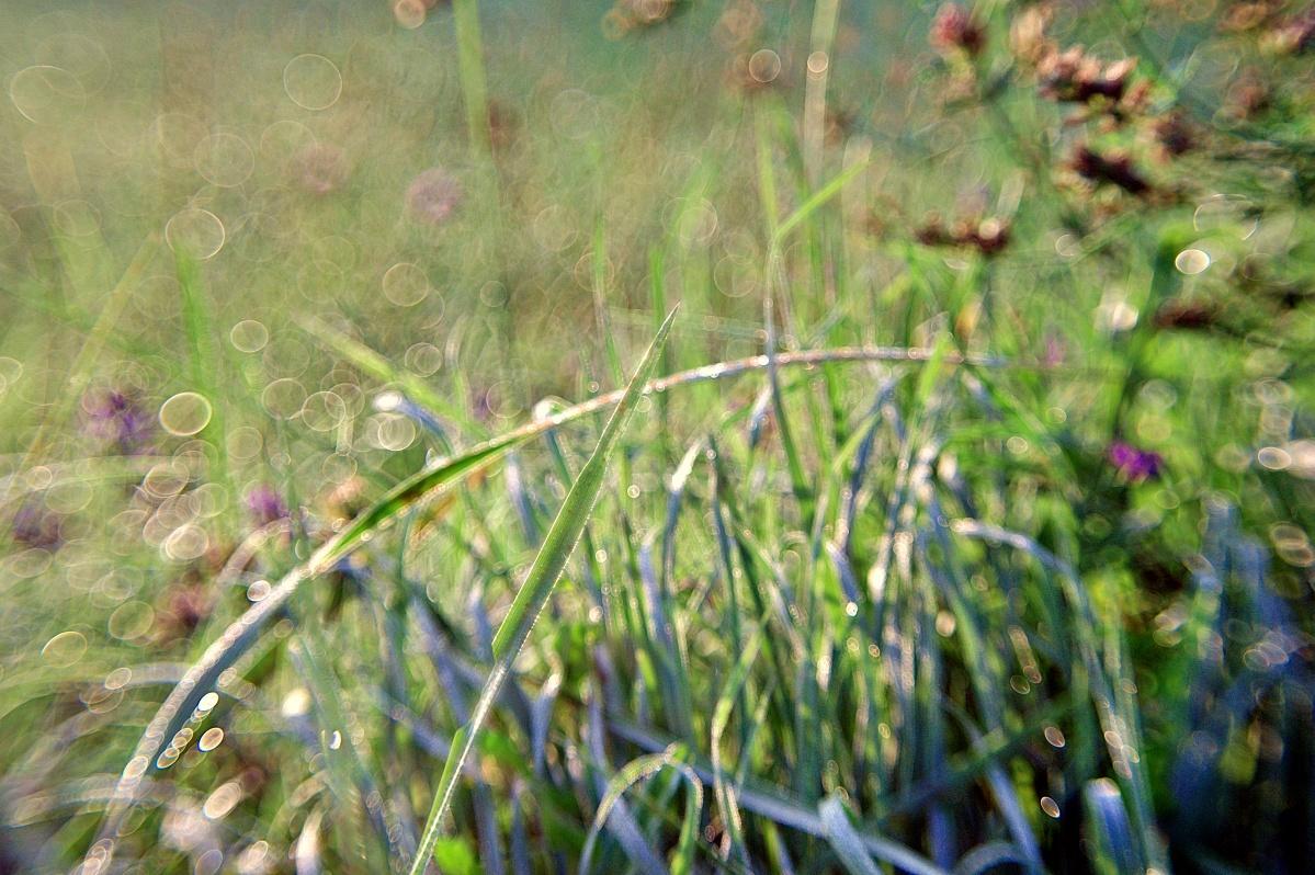 Tau auf Gras (1)