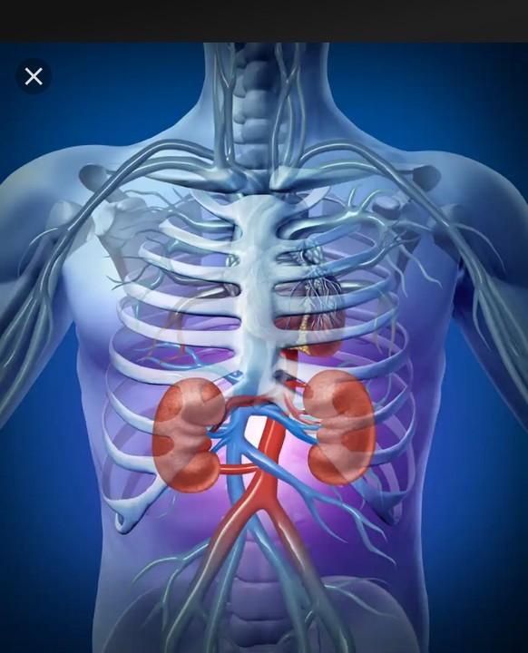 The Top 6 Causes Of Kidney Disease