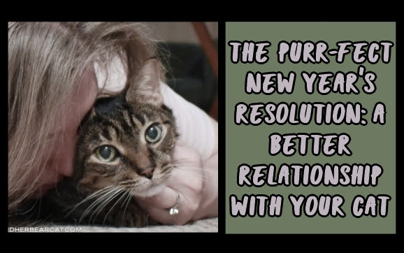 The Purr-fect New Year's Resolution: A Better Relationship With Your Cat