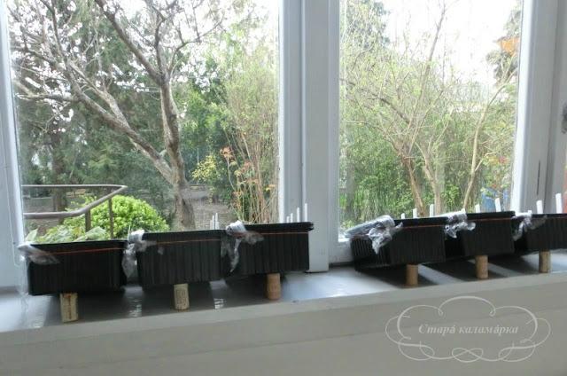 рассада, емкости для рассады, сад и огород, посадка семян