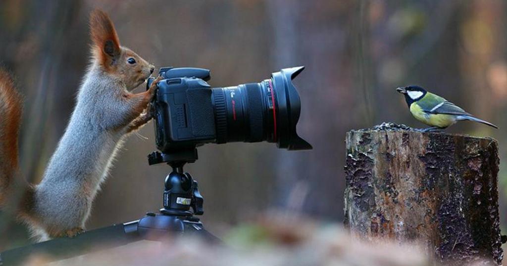Η πιο αξιολάτρευτη φωτογράφιση σκίουρων που έγινε ποτέ! (Εικόνες)
