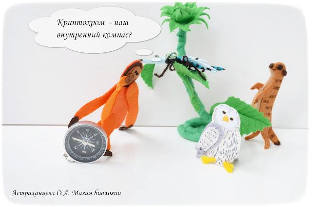 palchikovyj-teatr-orangutan-surikat-strekoza-podsolnuh-sova-kompas