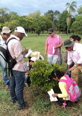 Agronomosis en plantas de fruta magica. Palmira 2012.