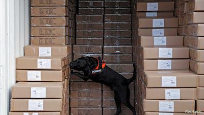 Perros podrían detectar a portadores de COVID-19