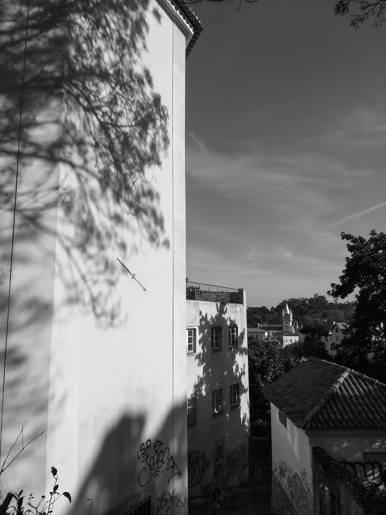A shadow of a tree on a building in Sintra, Portugal in black and white.