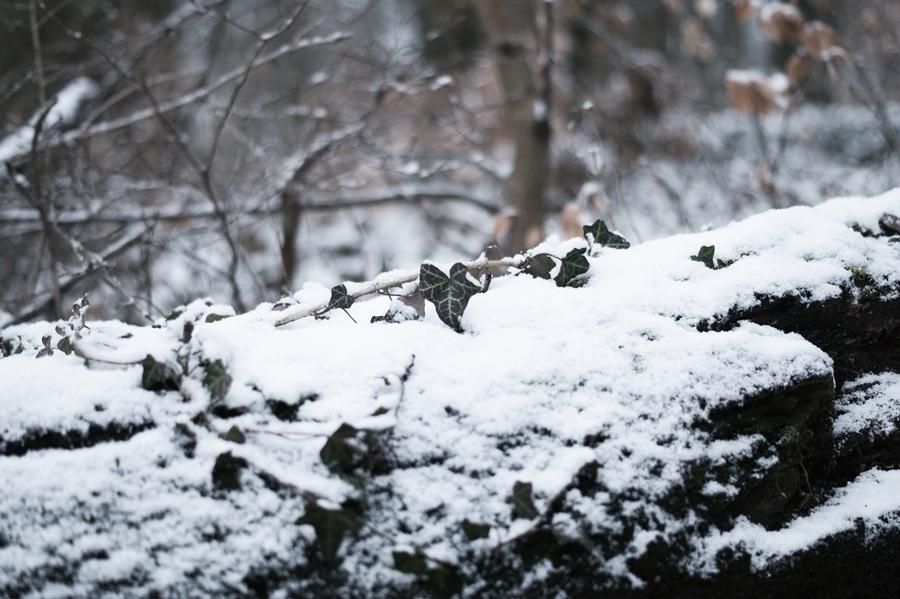 Blog + Fotografie by it's me! - Draussen - Frau Frieda sucht Schnee, Efeu auf einem zugeschneiten Baumstamm