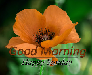 New Good Morning 4k Full HD Images Download For Daily%2B63