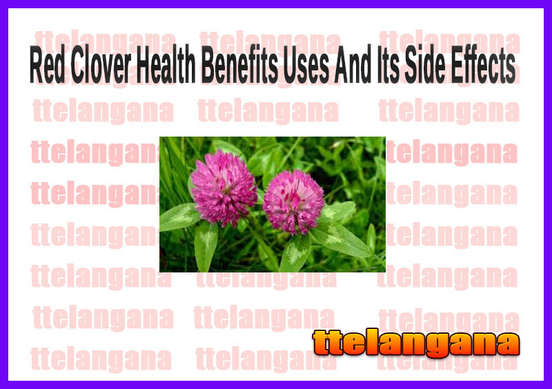 Red Clover Health Benefits Uses And Its Side Effects