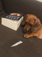 Baton dosłownie pożera książki (i udaje, że to nie on......), fot. paratexterka ©