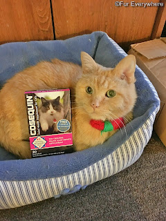 Carmine is in his bed with a box of Cosequin for Cats