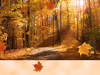 Free Fall Cell Phone Wallpapers Thanksgiving Wallpapers Fall Leaves Wallpaper