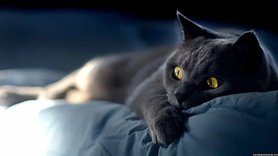 صور قطط صغار,صور عن القطط,قطه جميله2020  ,قطط صور2019,صور قطط حلوه,صور اجمل قطط,صور بزونات,بزازين جميله ,قطط حلوة,