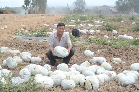 Gia Lai: Nông dân chạy đôn chạy đáo tìm thương lái đến mua nông sản