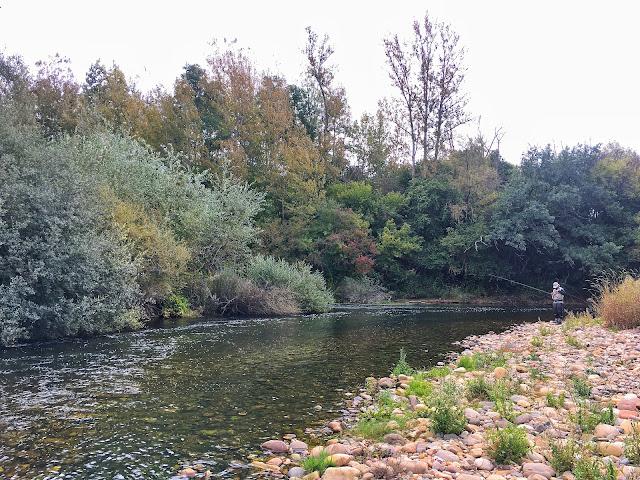 IMG 0849 - Eclosiones de otoño