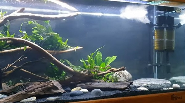 Internal Powerhead Filter for Oscar Fish Tank