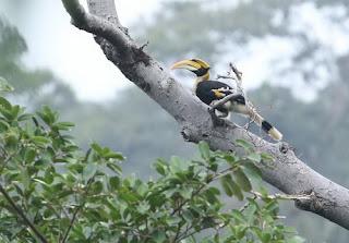 langkawi birdwatching tour