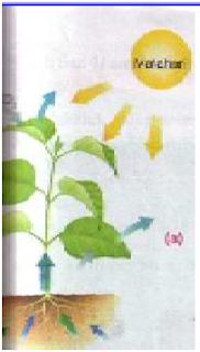 nutrisi tanah