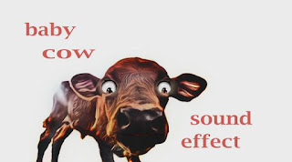 learn cow animal sounds