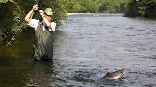 Tips in fishing for salmons in Alaska