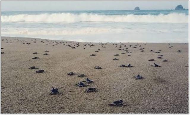 Pantai Sukamade;Top 10 Destinasi Wisata Banyuwangi;