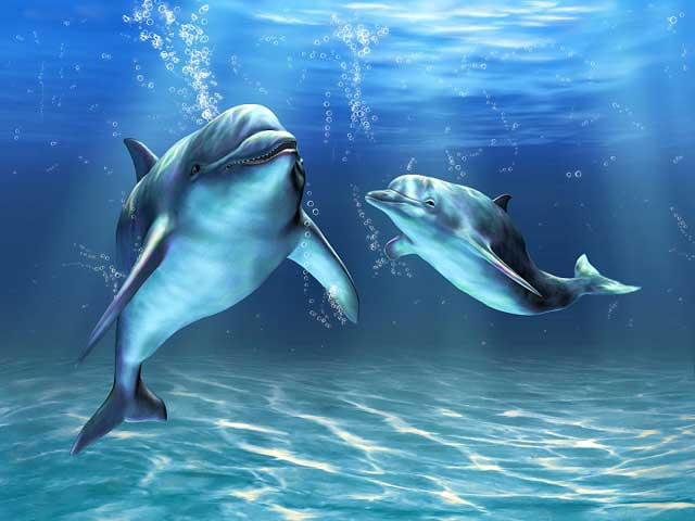 Lumba-Lumba Bisa Menyembuhkan Diri