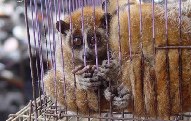 Coronavirus offers more proof why China needs to shut down live wild animal markets for good