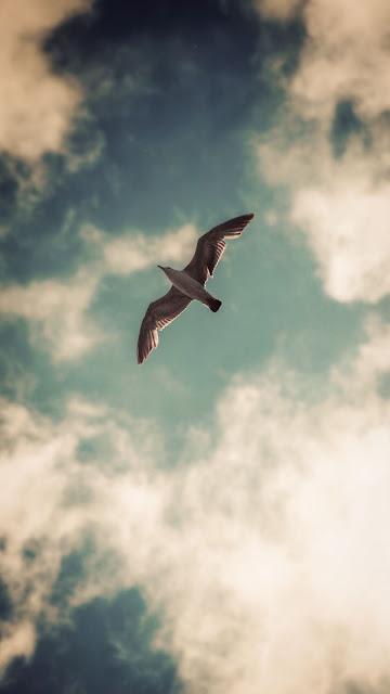 Papel de Parede Gaivota Voando no Céu