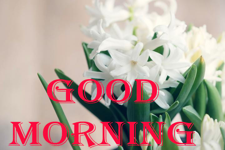 Good Morning With White Hyacinth Flowers
