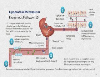 Metabolisme Lipoprotein | Alur Cerita LIPID Eps #1