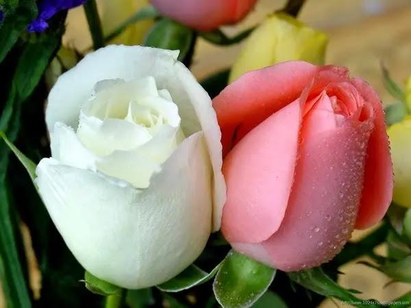 باقات الورد الجميلة